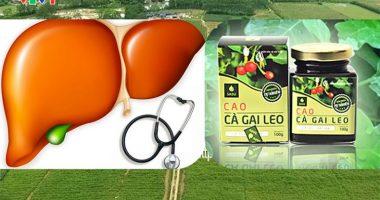 6 điều cho thấy Gan của bạn đang nguy kịch nên dùng Cà Gai Leo Sadu