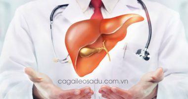 Cách phòng và trị bệnh Ung Thư Gan hiệu quả với Cà Gai Leo Sadu