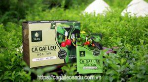 Câu hỏi thường gặp khi sử dụng Cà Gai Leo Sadu làm thuốc chữa bệnh