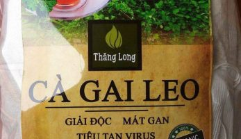 Trà Cà Gai Leo Sadu sản phẩm hỗ trợ điều trị các bệnh về Gan