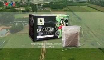 Bán trà cà gai leo chất lượng cao giá 79 nghìn đồng