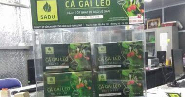 Cà gai leo SADU không chất lượng không thu tiền!