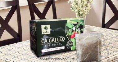 Công dụng, cách dùng trà cà gai leo túi lọc SADU