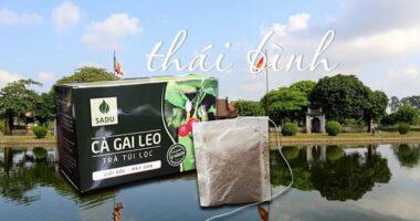 Địa chỉ bán cà gai leo ở Thái Bình?