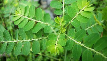 Top 6 trái cây, thảo dược giải độc gan hiệu quả theo đông y!