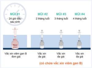 Thời gian tiêm phòng vi rút viêm gan b