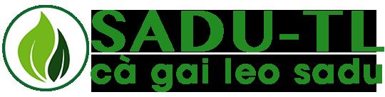 Cà gai leo SADU